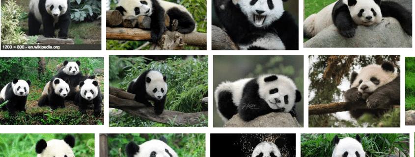 Raiola- manda- no - panda